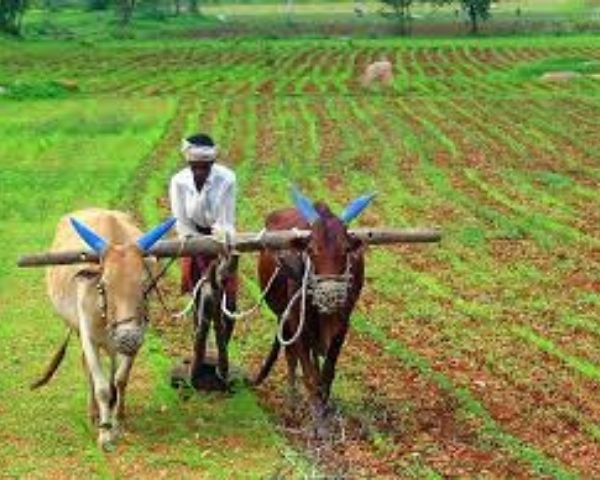 Image of indian farmer